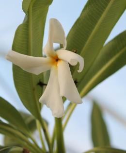 Esemplari con nome botanico