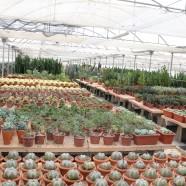 Offerta – Euphorbia